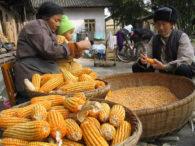 Corn in China - Mark Schlarbaum